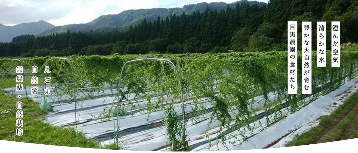 https://homepage.meguro-farm.jp/wp-content/uploads/2020/11/mtop2-1.png